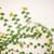 緑 · ツタ · 壁 · カバー · 美しい · 春 - ストックフォト © nalinratphi
