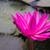 美しい · 桜 · 池 · 水 · 自然 - ストックフォト © nalinratphi
