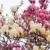 magnolia blossom stock photo © naumoid