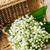 колокола · цветок · зеленый · утра · роса · воды - Сток-фото © neirfy