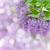lila · flores · edad · madera · naturaleza - foto stock © neirfy
