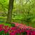 spring garden in keukenhof holland stock photo © neirfy