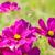 rosa · jardim · macro · tiro · água · primavera - foto stock © neirfy