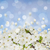 blossoming plum flowers stock photo © neirfy