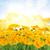 fleurs · jaune · isolé · blanche · jardin · fond - photo stock © neirfy