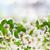 開花 · 白 · ツリー · 花 · ピンク · 支店 - ストックフォト © neirfy