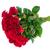 Rood · rozen · donkere · Rood · rose - stockfoto © neirfy