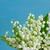 谷 · 緑の葉 · 青 · ぼけ味 · 空 - ストックフォト © neirfy