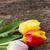 три · красный · тюльпаны · белый · лист · фон - Сток-фото © neirfy