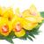 tropicales · hojas · flores · amarillo · mínimo · árbol - foto stock © neirfy