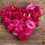 中心 · シンボル · 花 · 白 · 孤立した · 花 - ストックフォト © neirfy