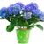 flores · branco · flor · estanho · pote - foto stock © neirfy