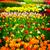 春の花 · オランダ · 庭園 · チューリップ · 緑の木 · 花 - ストックフォト © neirfy