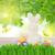 rabino · cesta · cor · ovos · de · páscoa · jardim · composição · digital - foto stock © neirfy