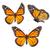 蝶 · コレクション · カラフル · 孤立した · 白 · 蝶 - ストックフォト © neirfy
