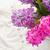 renda · flores · fronteira · preto · isolado · branco - foto stock © neirfy