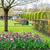 formal · primavera · jardim · colorido · narcisos · tulipas - foto stock © neirfy