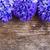jacinto · rosa · mesa · de · madeira · verde · cabeça · planta - foto stock © neirfy