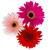 drie · bloemen · geïsoleerd · witte · schoonheid - stockfoto © neirfy