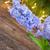 inverno · jacinto · fresco · azul · branco · pote - foto stock © neirfy