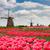 dutch windmills in spring day stock photo © neirfy