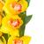 amarelo · orquídea · flor · fundo · beleza - foto stock © neirfy