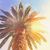Tropical palm tree stock photo © neirfy