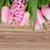rosa · jacinto · flores · vermelho · pote · isolado - foto stock © neirfy