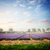 holandés · primavera · jacinto · flores · campo · azul - foto stock © neirfy