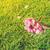elma · ağacı · çiçek · taze · dal · yaprakları · yalıtılmış - stok fotoğraf © neirfy