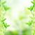 green bamboo stems stock photo © neirfy
