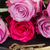 tasti · rosa · rose · due · fresche · simbolo - foto d'archivio © neirfy