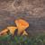 chanterelles in green moss stock photo © neirfy