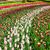 kleurrijk · bed · roze · bloemen · oranje - stockfoto © neirfy