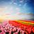 チューリップ · 花 · 赤 · オレンジ · 黄色 - ストックフォト © neirfy