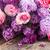 lilac flowers stock photo © neirfy