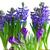 belo · roxo · violeta · flores · vaso · branco - foto stock © neirfy
