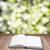 nyár · fapadló · zöld · fű · bokeh · napfény · tavasz - stock fotó © neirfy