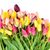 bunch of fresh tulips flowers close up stock photo © neirfy
