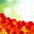 bella · rosso · Daisy · bianco · vaso · isolato - foto d'archivio © neirfy
