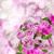 rosa · vaso · madeira · textura · primavera · rosa - foto stock © neirfy
