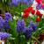 チューリップ · スイセン · 美 · ピンク · チューリップ · 花 - ストックフォト © neirfy