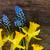 цветы · синий · серый · bokeh · Пасху · цветок - Сток-фото © neirfy