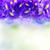 синий · Iris · цветы · границе · копия · пространства · bokeh - Сток-фото © neirfy