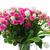 тюльпаны · далеко · назад · мелкий - Сток-фото © neirfy
