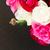 köteg · fekete · ribiszke · levél · izolált · fehér - stock fotó © neirfy