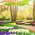 abrótea · jacinto · campo · Holanda · flores · primavera - foto stock © neirfy