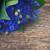 blue cornflowers on wood stock photo © neirfy