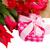 weiß · Tulpen · frischen · leer - stock foto © neirfy