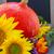 automne · tournesols · citrouille · fraîches · brut · nature - photo stock © neirfy